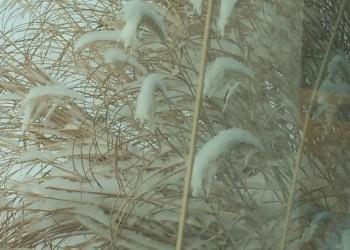 snow covered through window